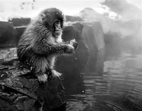 photographer david yarrow animal kingdom david yarrow