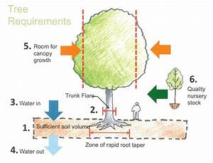 Ct Tree Planting And Maintenance
