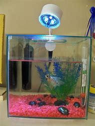 Best Diy Betta Tank Ideas And Images On Bing Find What You Ll Love