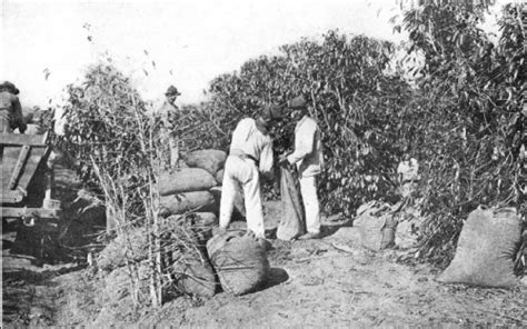 India's Ancient Coffee Industry Sets Sight Lavazza Coffee Machine Ireland Tin Kosove Humber River Hospital Amazon Scrub Holland And Barrett White Marble Table Set Uae