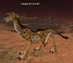 Jaguarundi FFXIclopedia FANDOM powered by Wikia