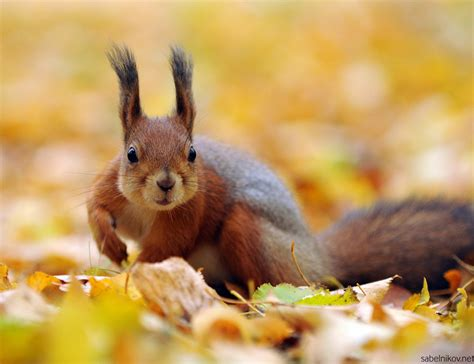 Autumn Animal Wallpaper - autumn animal images autumn crafts picture