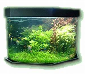Aquarium Einrichten Anfänger : aquarium guide magazin tipps fuer einsteiger ~ Lizthompson.info Haus und Dekorationen