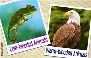 examples  cold blooded animals