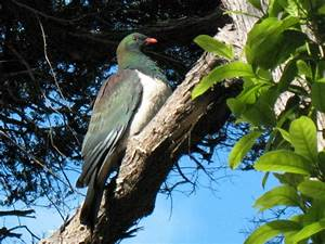 5 MORE amazing places to see native New Zealand birds ...