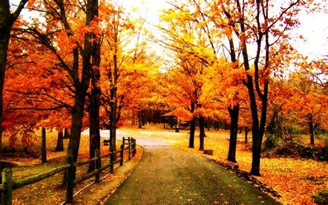 beautiful hd trees wallpapers