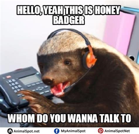 Meme Honey Badger - honey badger memes