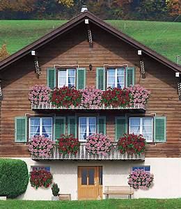 Hängepflanzen Für Balkonkästen : h nge geranie villetta 39 white burg h ngepflanzen bei ~ Michelbontemps.com Haus und Dekorationen