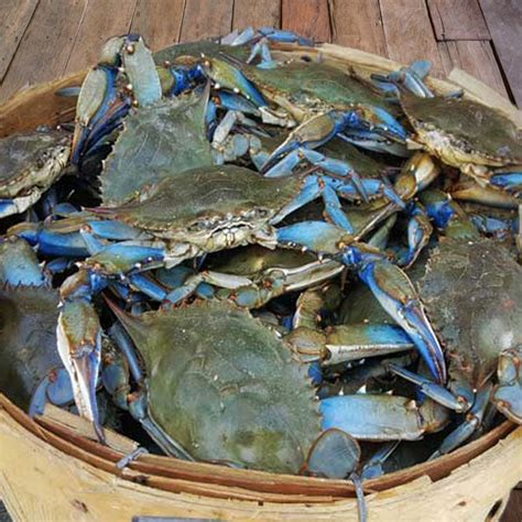 large male maryland blue crabs delivered camerons seafood