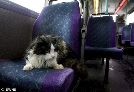 cat  boarded  bus  day   years killed