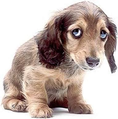 beths thoughts sad dog