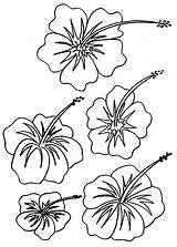 Flower Coloring Hibiscus Pages Printable Hawaiian Print Flowers Colouring Drawing Adult Hawaii Luau Plant Bestcoloringpagesforkids Plants Tropical Party Drawings Bouquet sketch template