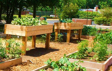 pin raised vegetable beds on
