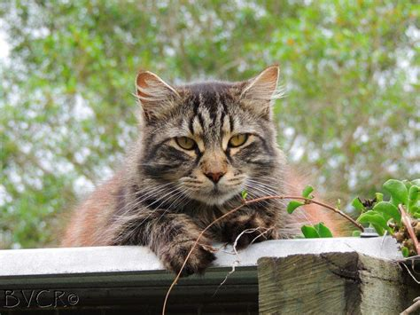 the vet shed brisbane brisbane valley cat rescue home