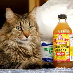 getting rid of fleas on cats 5 flea remedies for cats diy ideas