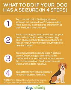 3 natural treatments for dog seizures and epilepsy