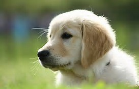 Résultat d'images pour photo chien trop mignon