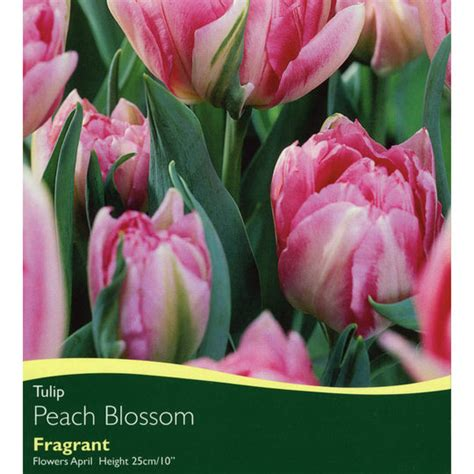 bulbs tulip blossom bulbs for sale mail order
