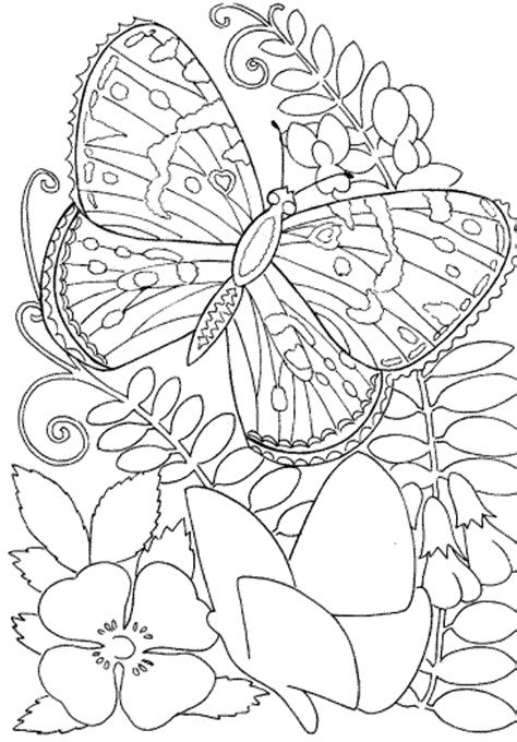 butterfly coloring pages  print  adults