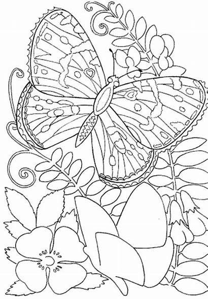 Coloring Adults Pages Butterfly