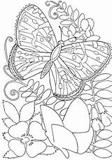Coloring Print Pages Adults Butterfly sketch template
