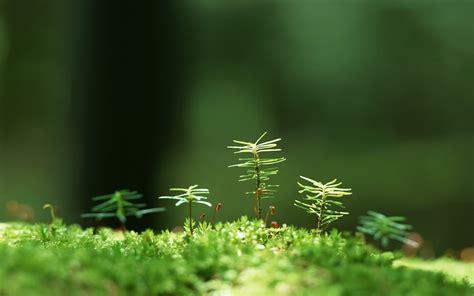Nature Backgrounds free download   PixelsTalk.Net