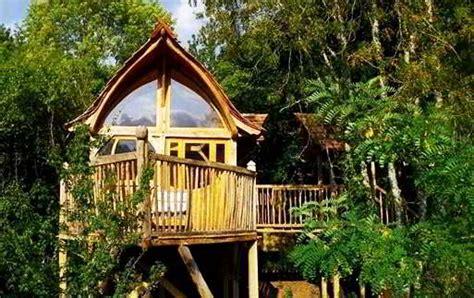 desain rumah pohon sederhana  kayu bambu
