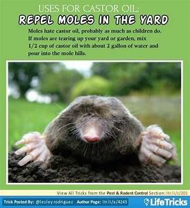 Pest  U0026 Rodent Control