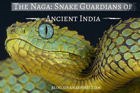 Snake Guardians Of Ancient India