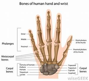 What Is A Metacarpal Splint   With Pictures