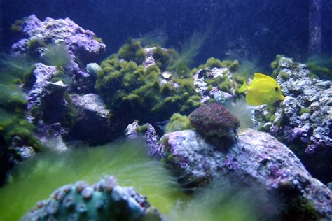 Reef Tank Provides Students with New Learning Opportunities | Estrella Mountain News