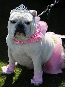costume ideas for dogs and cats diy