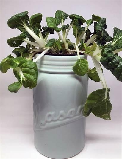 Grow Lights Led Garden Indoor Herb Herbs