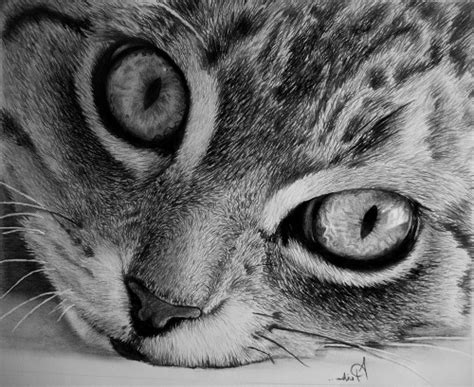 realistic animal drawings tumblr