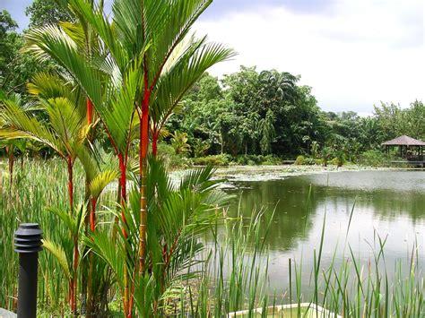 Gardens : Singapore Botanic Gardens