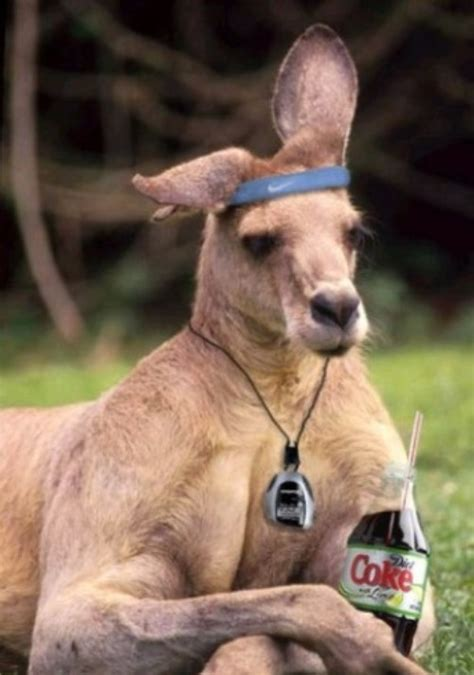 funny kangaroo pictures