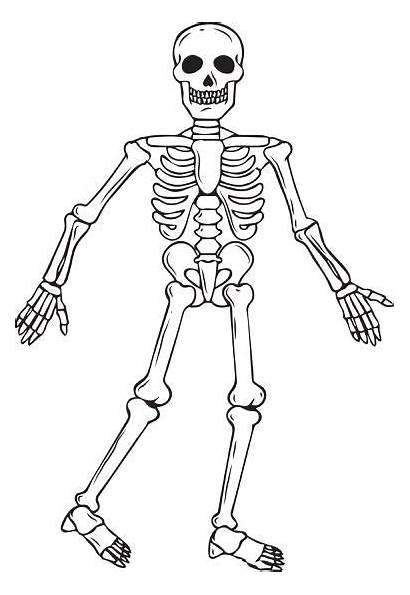 Skeleton Coloring Pages Human Halloween Printable