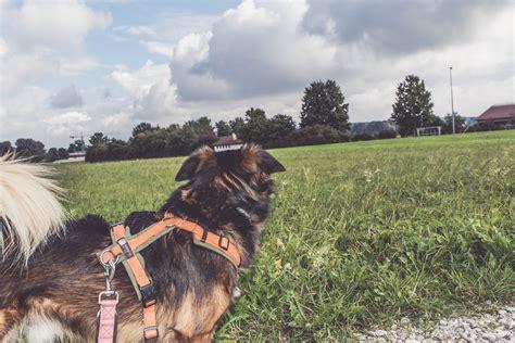 wohnungssuche mit hund tipps wohnungssuche mit hund hundeblog canistecture