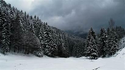 Forest Winter Desktop Backgrounds Wallpapers