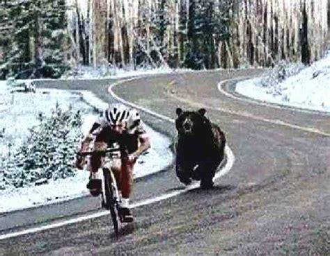 wiki world hilarious bear runs  cyclist
