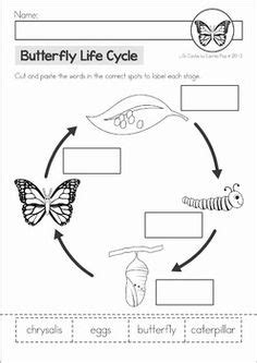 free cycle of a butterfly cut amp paste worksheet 912 | d1e7cb998127ec346a810a10d43b0e77 butterfly worksheets butterfly life cycle kindergarten