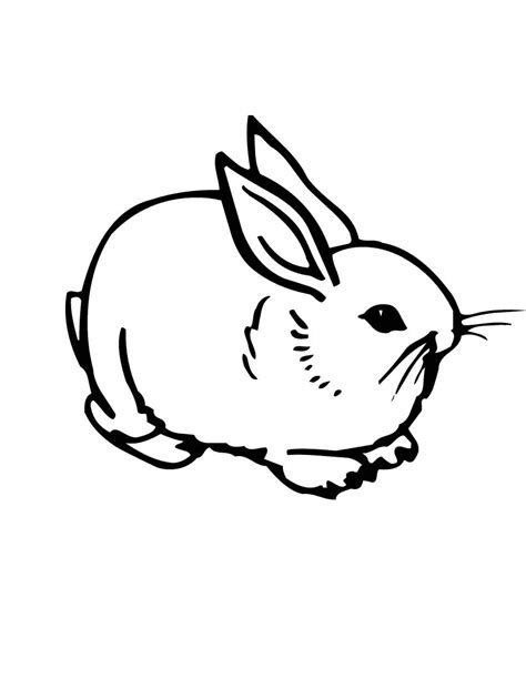 printable rabbit coloring pages  kids