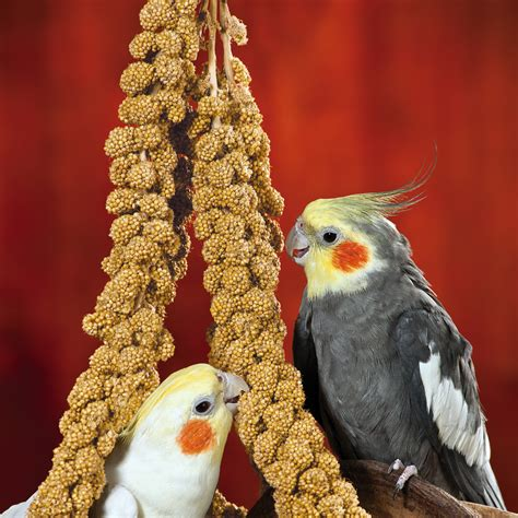 oliger seed company domestic bird seed products