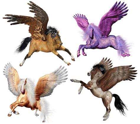 photo horse pony pegasus magic winged fantasy flying