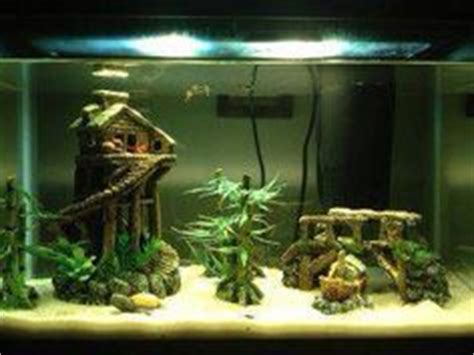 1000+ Images About Fish Aquarim Ideas On Pinterest Fish