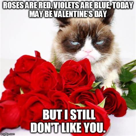 Grumpy Cat Meme Valentines Day - grumpy cat imgflip