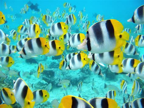 fish wallpaper tropical fish background tropical school of fish 2 Tropical