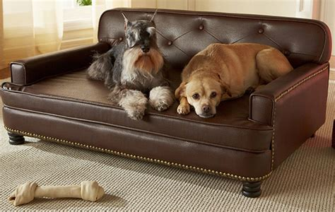 The Best Large Dog Beds For Big Breeds Or Doggy Families