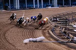 Greyhound Racing: Droopys Posh to make all | Horse Racing ...