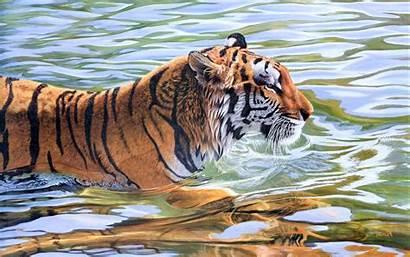 Tiger Desktop Wallpapers Backgrounds Definiton Allhdwallpapers